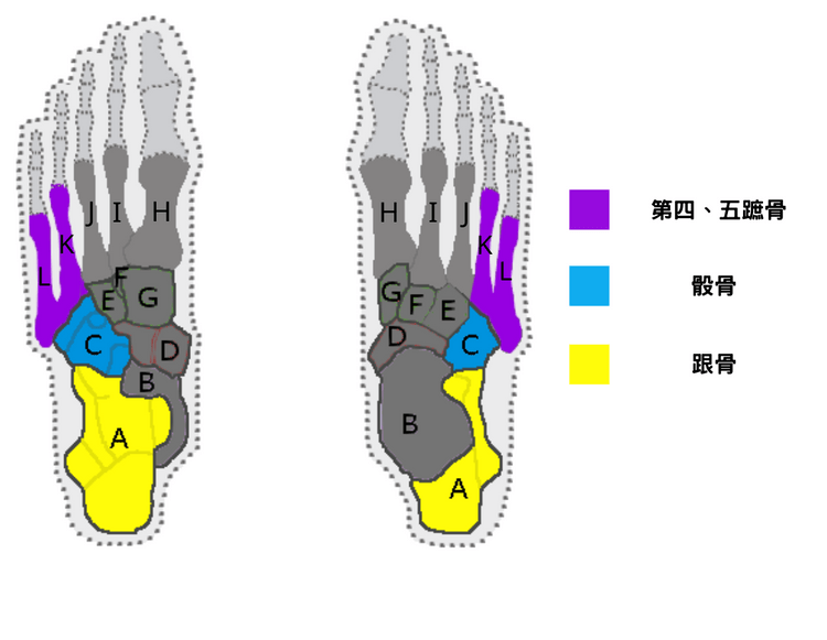 Bone structure of lateral longitudinal arch